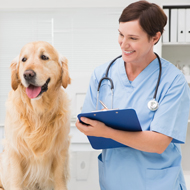 Majority of European vets in the future will be female, survey finds