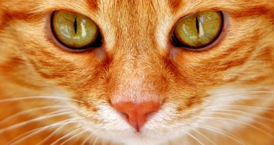 New study finds certain people are 'cat whisperers'