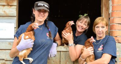 Charity launches campaign for UK's first hen hospital
