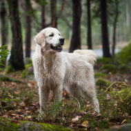 Vets confirm further five cases of Alabama rot