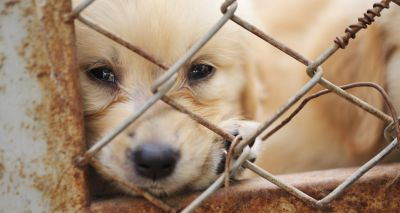 Change needed to report illegally imported dogs