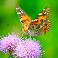 National Trust releases 2019 wildlife review