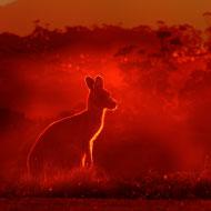BEVA and BSAVA donate 7,000 to Australian fires veterinary care