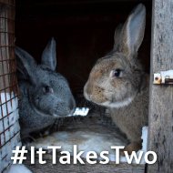 New recommendations to improve rabbit welfare