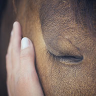 New guidelines on the safe use of analgesia in horses