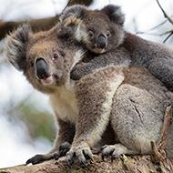 University of Sydney confirms 480 million animals killed in NSW bushfires