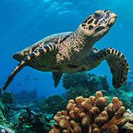Minister calls for urgent action to protect planet's oceans