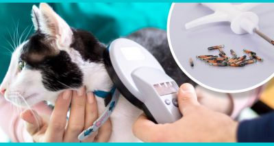 Top stories of 2019: Countrywide calls for cat microchipping