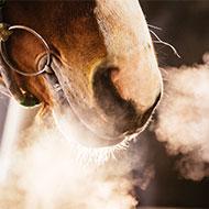 Equine inhaler receives marketing authorisation
