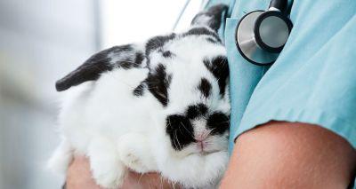 Half of UK's pet rabbits live life in solitude