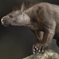 Foot bone evolution helped prehistoric mammals thrive