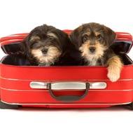 image dog travel