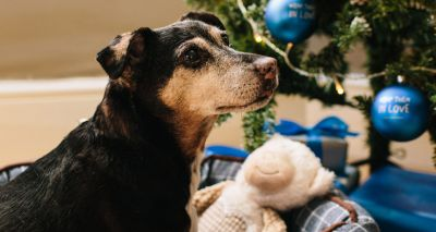 Eighty per cent of Brits buy their dog a Christmas present