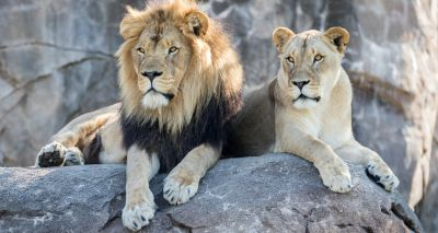 New test for early TB identification in zoo animals