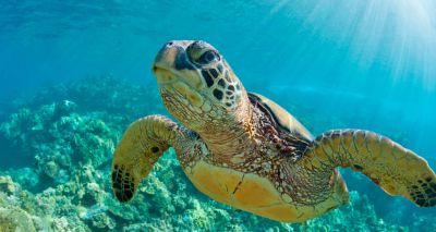 Study reveals extent of chelonian extinction crisis
