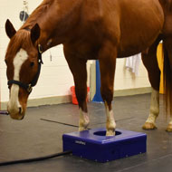 PET scan carried out on standing horse