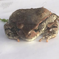 Holidaymaker finds South African frog in suitcase