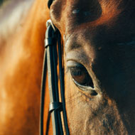 Vets and medics join forces to remove horse's sinus tumour