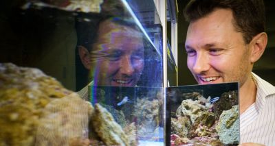 Fish appear to recognise themselves in the mirror