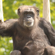 Concerns raised following Belfast Zoo animal escapes