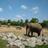 New tool to monitor wellbeing of captive elephants