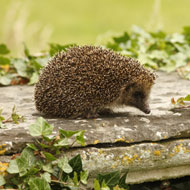 Early spring 'could spell disaster' for wildlife