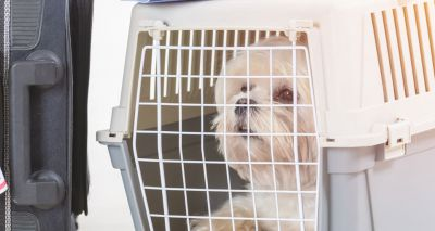 Spike in pet owners seeking travel guidance