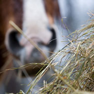 Straw bedding and dry hay 'significant risk factors' for equine IAD