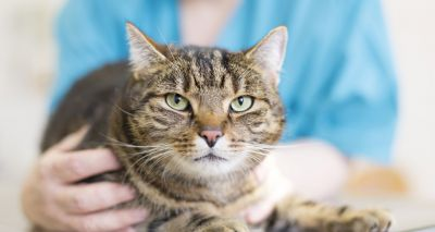 AMR gene spreads among pets at UK vet hospital