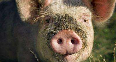 NPA issues complaint over Amazon swill feeding advert