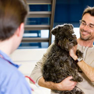 Vets urged to promote pre-purchase consults