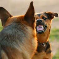"""""""Undesirable behaviour"""" in dogs linked to early death"""