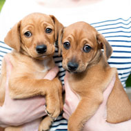 Kennel Club Assured Breeders 'should be considered low risk'