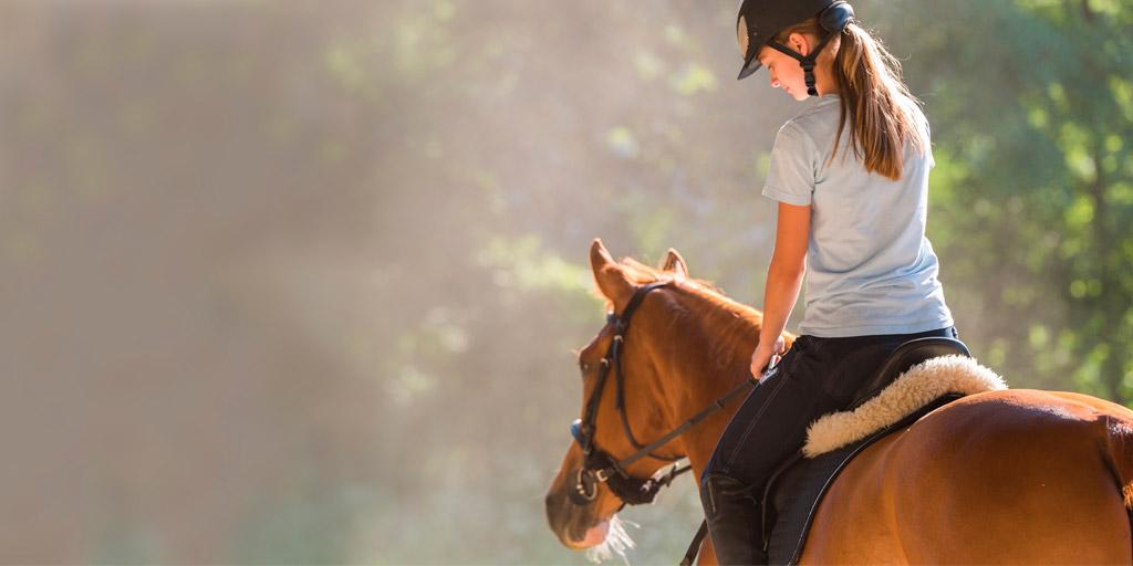 Study confirms value of Ridden-Horse-Ethogram