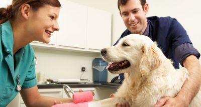 BVA backs new veterinary nurse career pathways