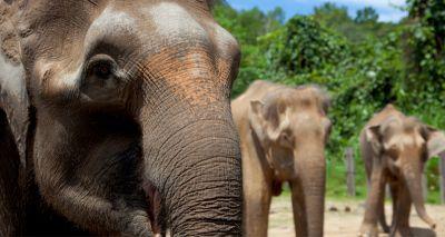 Researchers propose rethink of 'endangered species' definition