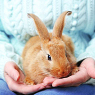 Charity urges people to rehome rabbits