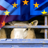 NSA calls for urgent action to protect UK sheep industry