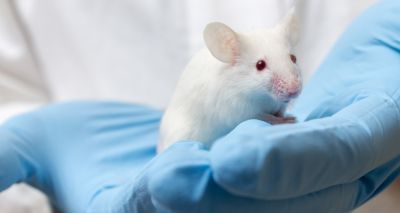 Scientific experiments on animals at lowest level since 2007