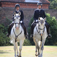Met Police horses honoured for outstanding devotion