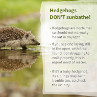 Public urged to look out for hedgehogs seen in daylight