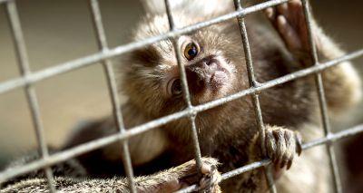 Labour announces plans to ban pet primates