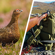 Labour calls for review of 'driven' grouse shooting
