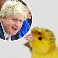 Lost canary nicknamed after Boris Johnson