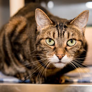 Scientists identify 25 signs of pain in cats