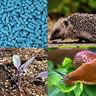 Ban on metaldehyde slug pellets overturned