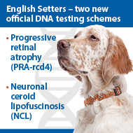 DNA testing schemes approved for English setters