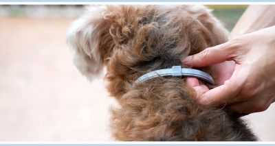 Bayer issues warning over fake Seresto collars