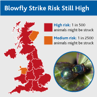 "Blowfly risk should still be viewed as ""high,"" experts warn"