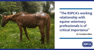 "Congress highlights ""critical importance"" of RSPCA's equine vet relationship"
